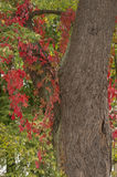 Atmospheric autumn. Beautifully colored leaves during the bright and sunny autumn Royalty Free Stock Photo