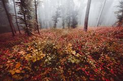 Atmospheric autumn woods background with red leaves. Atmospheric autumn woods background. Mysterious autumn forest with red leaves. Enchanted autumn woods with royalty free stock photo
