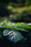 Atmospheric closeup of wild growing plants with a small red inse. Ct on it Stock Photography