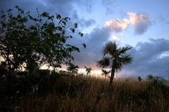 Atmospheric evening in Cuban wilderness Royalty Free Stock Photo