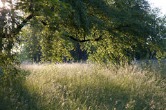 Atmospheric fodder meadow under trees Stock Photography