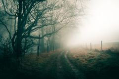 An atmospheric foggy winters day with a path following the edge of woodland, with a desaturated moody edit. An atmospheric foggy winters day with a path stock photo