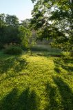 Atmospheric landscape of shadows dew and mist on a treed lawn stock image