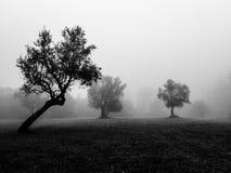Atmospheric minimal shot into the woods. Misty foggy landscape Stock Photos