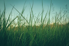 Atmospheric photo of a meadow. Royalty Free Stock Images