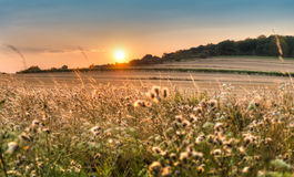Atmospheric sunset over the field Stock Photography