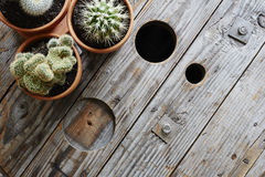 Atmospheric variety of cacti on industrial wooden surface. Urban design industrial living modern interior Royalty Free Stock Images