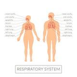 Atmungssystem Lizenzfreies Stockfoto