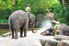 Ato de pulverização da água do elefante imagem de stock