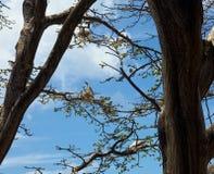 Atobas in ihren Nestern, Fernando de Noronha, Brasilien Stockfotografie