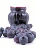 Atolamento da uva-do-monte Imagem de Stock