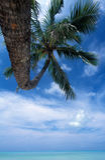 Atoll bleu, Polynésia français Images libres de droits