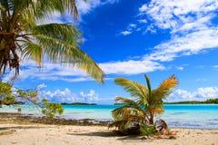 Atoll de Rangiroa images libres de droits