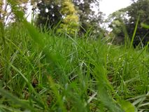 Atop the grass in the park. A photo atop the grass overlooking the park stock image
