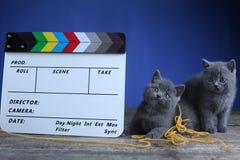 Atores dos gatinhos e um clapperboard, produção video fotografia de stock