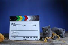 Atores dos gatinhos e um clapperboard, produ??o video fotos de stock