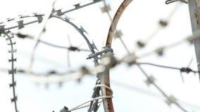 Atormente el foco del alambre de púas en el d3ia, los puntos y los alambres