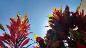 Atrás das árvores Imagem de Stock Royalty Free