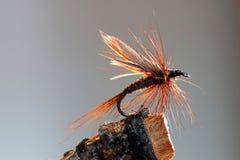 Atração da pesca com mosca de Brown fotografia de stock