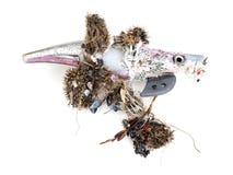 Atração de pesca plástica lavada acima na praia, poluição ambiental mas igualmente perigo - com ganchos ferozes Fundo branco imagens de stock royalty free