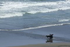 Atracado con caballos de fuerza en la playa Imagen de archivo libre de regalías