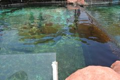 Atracción marina Exposición del acuario famoso de Eilat Israel imagen de archivo