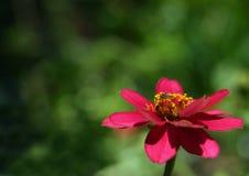 Atracción natural Fotos de archivo libres de regalías