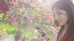 Atrakcyjna m?oda miedzianow?osa kobieta u?ywa smatphone w parku przy zmierzchem Wiosna kwiaty wiśnia lub Sakura okwitnięcia na tl zbiory