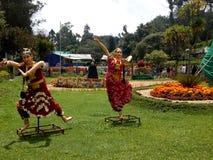 Atrakcyjne Dancingowe lale obraz royalty free
