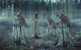 Atrakcyjny żeński trener z tygrysami Zdjęcie Royalty Free