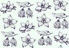 Atramentów kwiatów wzoru ręka rysujący wektor Obraz Stock