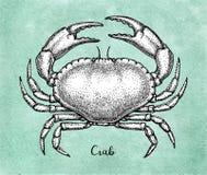 Atramentu nakreślenie brown jadalny krab ilustracji
