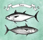 Atramentu nakreślenie tuńczyk Ilustracji