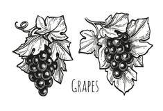 Atramentu nakreślenie winogrona royalty ilustracja