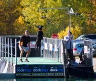 Atraque el acontecimiento grande del aire del campeonato nacional del perro Foto de archivo