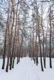 Através da floresta do inverno Imagens de Stock