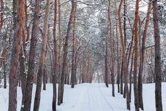 Através da floresta do inverno Imagem de Stock Royalty Free