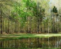 Através da lagoa Fotos de Stock Royalty Free