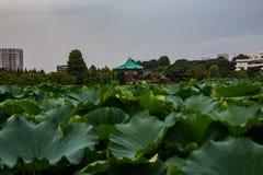 Através da lagoa erva-bloqueada em Ueno foto de stock royalty free