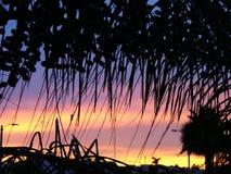 Através da palmeira Imagem de Stock