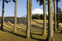 Através das árvores Foto de Stock