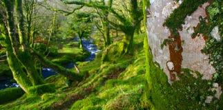 Através das árvores Imagem de Stock Royalty Free
