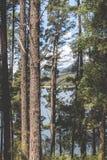 Através das árvores Fotografia de Stock Royalty Free