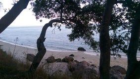 Através das árvores Imagem de Stock