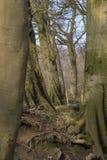 Através das árvores Fotos de Stock
