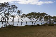 Através das árvores dos manguezais, rio de Maroochy Fotos de Stock Royalty Free