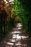 Através das aleias obscuros do jardim Imagens de Stock
