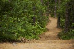 Através das madeiras Imagem de Stock Royalty Free