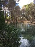 Através das madeiras, ao rio 2 Foto de Stock Royalty Free