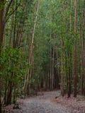 Através das madeiras - Santa Irene fotos de stock